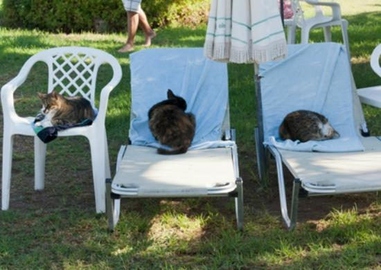 Aloe Hotel: Cats, cats and more cats