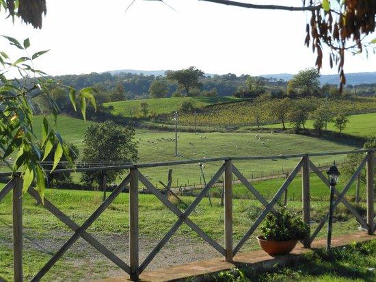 Agriturismo La Valle degli Ulivi: VISTA DAL GIARDINO