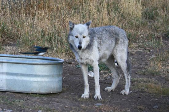 Howlers Inn Bed & Breakfast and Wolf Sanctuary 사진