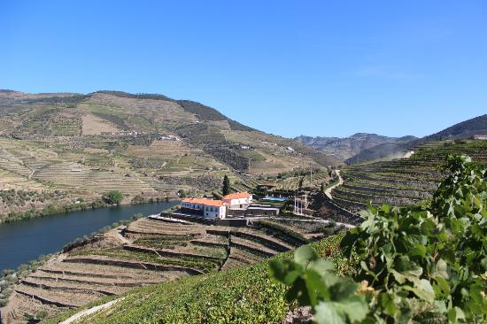 Quinta do Pego : View from the vineyards