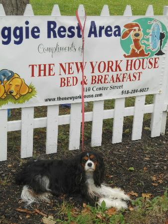 ‪‪New York House Bed & Breakfast‬: We provide a rest area for dogs and their owners during Harvest Festival‬
