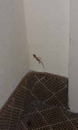 Wyndham Garden Dallas North: Lizard inteh room