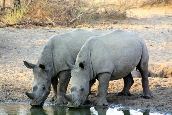 Khama Rhino Sanctuary: At the waterhole