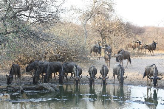 Khama Rhino Sanctuary: Waterbuck