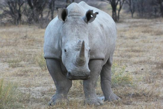 Khama Rhino Sanctuary: Rhino