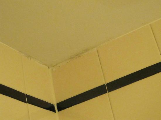 O'Callaghan Davenport Hotel: More mold