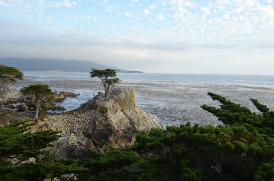 BEST WESTERN Carmel's Town House Lodge: Lone Cypress Tree 17 Mile Drive