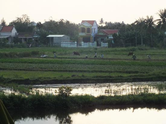 Hoi An Riverside Resort & Spa: THE PADDY FIELDS..WORK IN PROGRESS..!