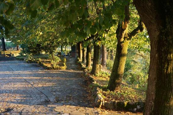 Podere Luciano: parco