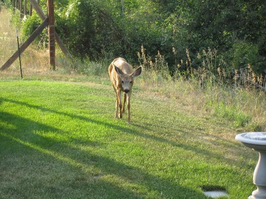 Methow River Lodge & Cabins: a welcome visitor