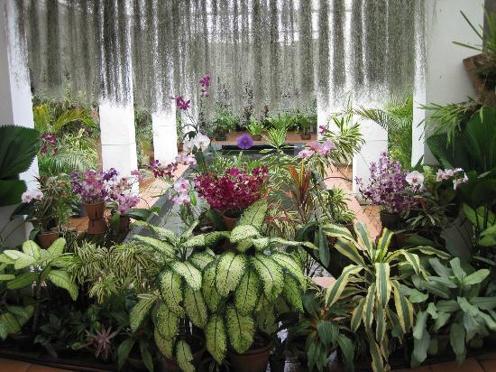 Peradeniya, Sri Lanka: Orchid House