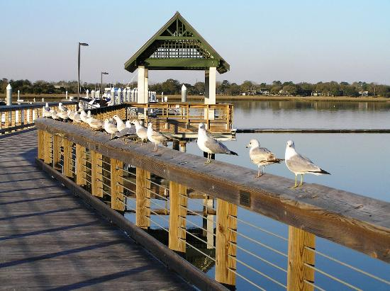 College of Charleston: City Marina, Ashley RIver, just a few blocks away!