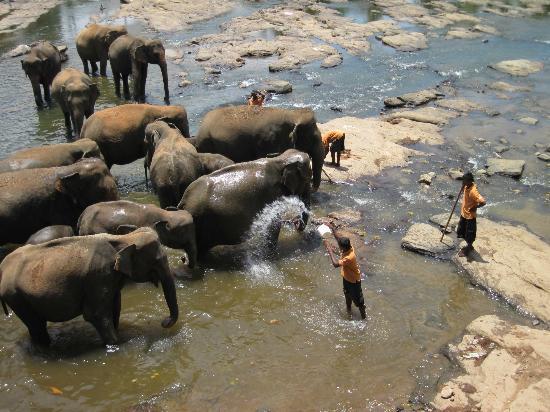 Pinnawala Elephant Orphanage 사진