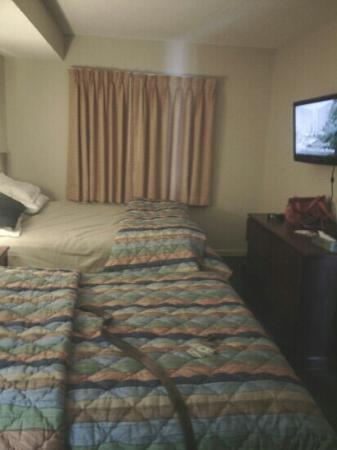 Palmetto Shores Oceanfront : 2 queen beds in this room