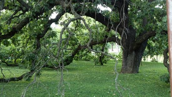 Giant Oak Park