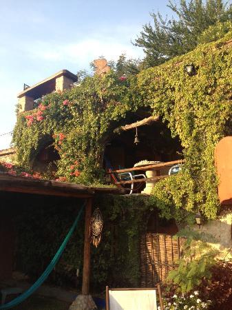 La Casa del Guamuchil: Oasis con plantas