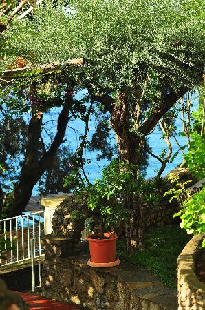 La Maliosa d'Arienzo: garden