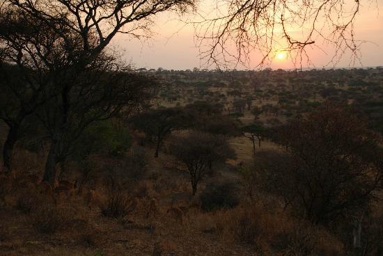 Tarangire Safari Lodge : The sunrise is amazing... especially with the antelope grazing below your tent!