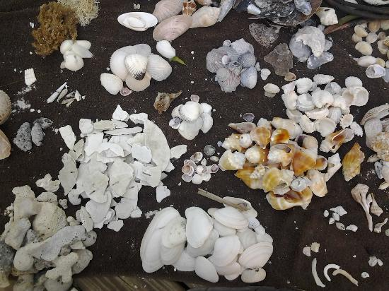 Blue Heron Cottage #6: Shells, shells, shells