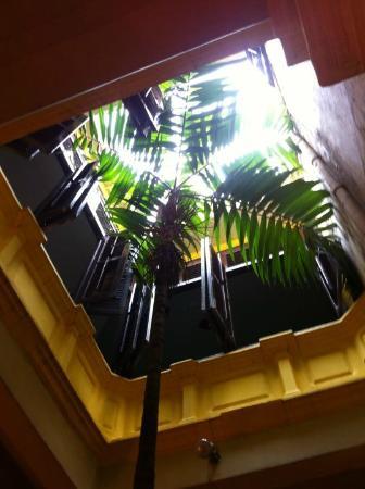 Cafe 1511: ชอบ เค้าปลูกต้นไม้กลางบ้าน