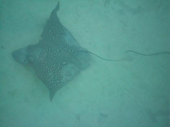 Le Meridien Bora Bora: Overwater Bungaloo #322 - Stingray @ Glass Floor