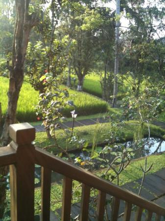 Ananda Cottages: beautiful view