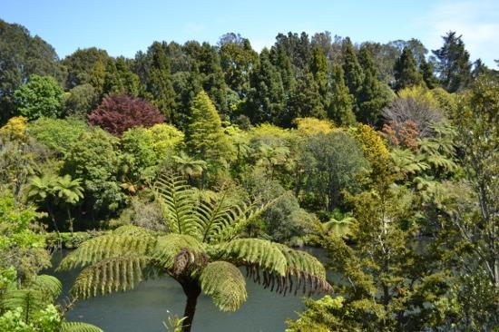 Parque Pukekura: So many shades of green!
