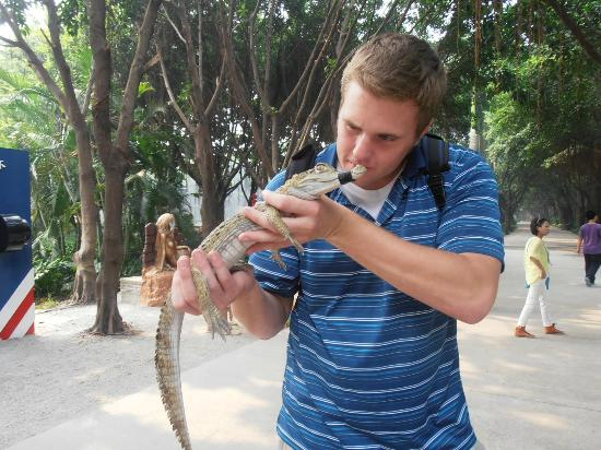 Guangzhou Crocodile Park : baby croc
