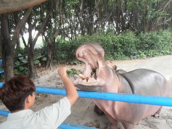 Guangzhou Crocodile Park : Hippo
