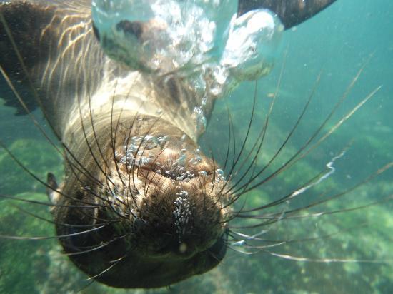 San Cristobal, Ecuador: jugando bajo el agua