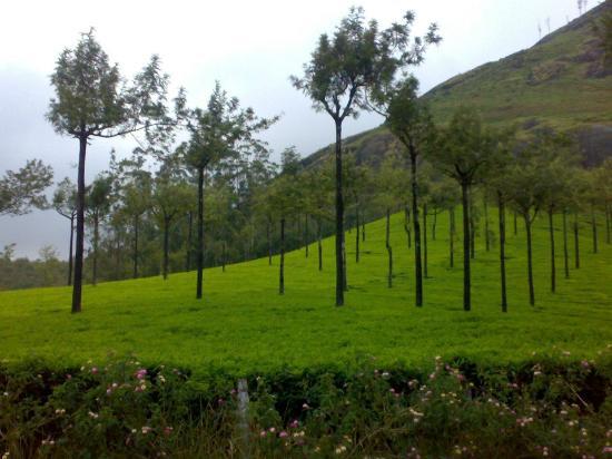 Pictures of Marikar Resorts - Munnar Photos