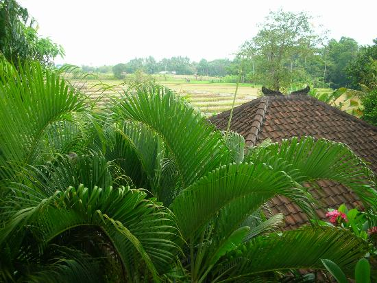 Abian Biu Mansion: Veiw of rice feilds from room
