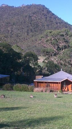 Emirates One&Only Wolgan Valley: Morning view from suite - kangaroos in foreground