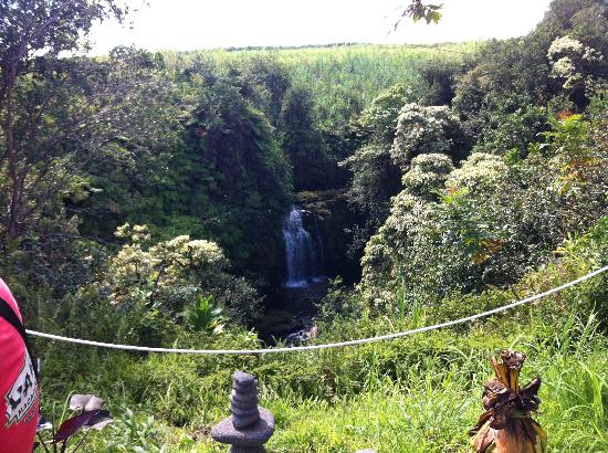 Skyline Eco Adventures - Akaka Falls Zipline Tour: Small waterfall