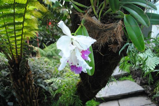 Bergius Botanic Garden: Some of the flowers