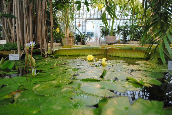 Bergius Botanic Garden: Victoriahuset 1