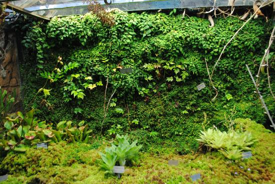 Bergius Botanic Garden: Edvard Andersons Conservatory