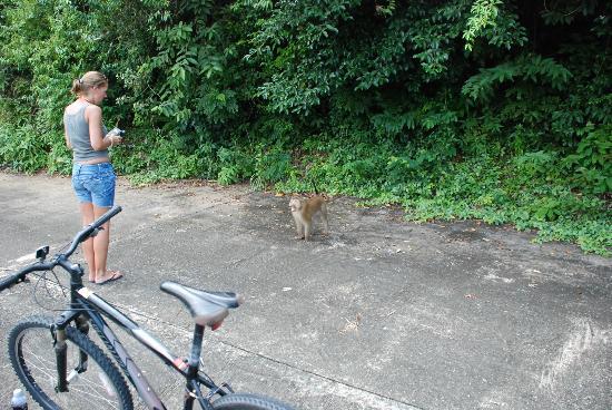 The Aiyapura Koh Chang: Wild Monkeys at the resort