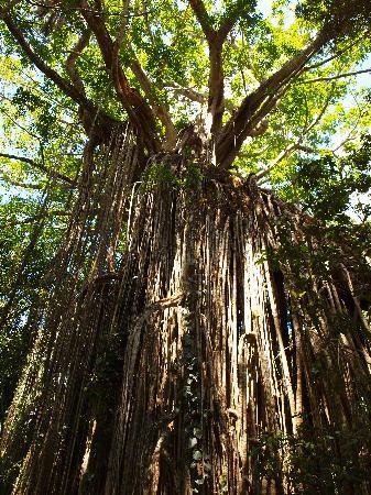 Curtain Fig National Park: the far side