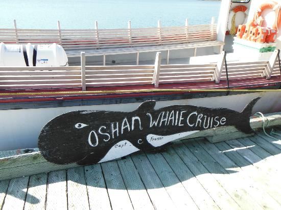 Oshan Whale Watch: Such a great cruise :)
