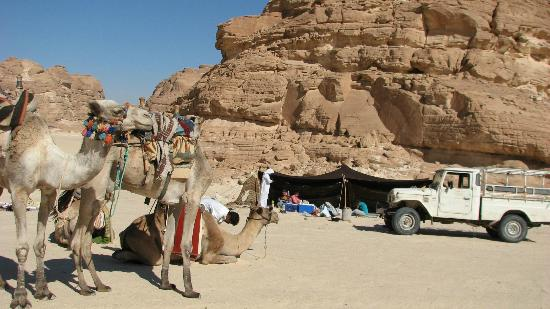 Sinai At Its Best Day Tours: our camp fire