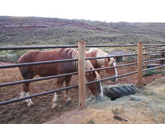 Sylvan Dale Guest Ranch: Draft horses