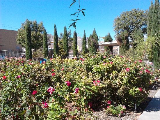 El Paso Municipal Rose Garden: It Was Beautiful, Iu0027ve Never Seen So