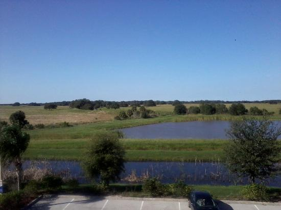 Hampton Inn & Suites Lake Wales: Soothing view of the wetland field from my room.