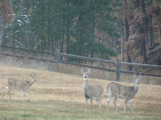 Newton Fork Ranch: These three were waiting when we first drove up