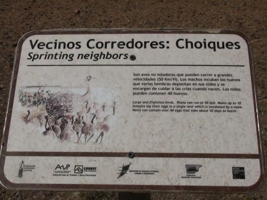 Cabo Dos Bahias: Ñandúes