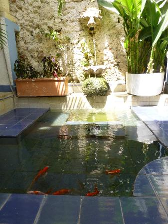 Casa de la Chicheria: Fish Pond