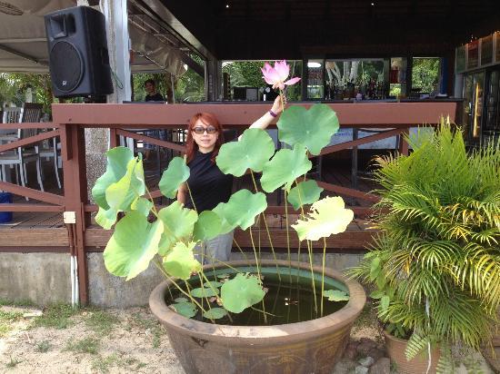 Bora Bora Beach Bar - Palawan Beach : Lotus blooms