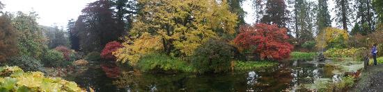 Ardgartan Hotel: Benmore woodland garden