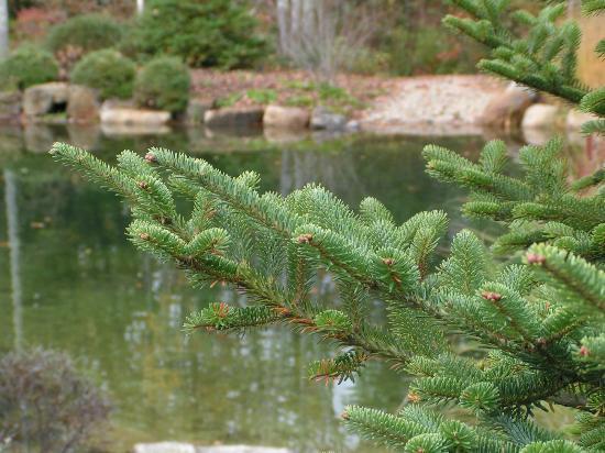 Hidden Pond: .